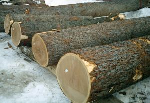 export hardwood logs